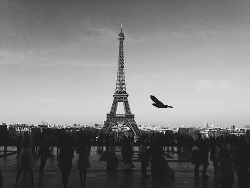france bird flying above people Walkin near Eiffel tower tower