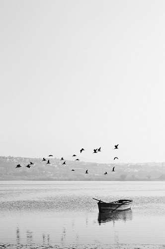 animal birds flying over boat bird