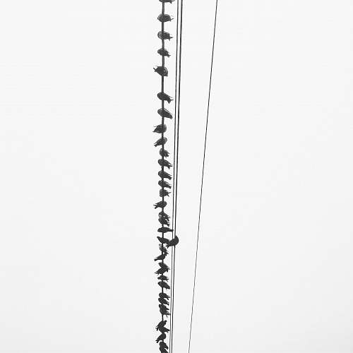 white birds perching on utility wires black