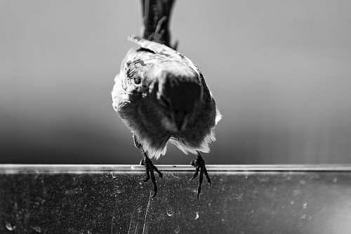 animal brown bird gloria jeans cafe bebek (no longer there)