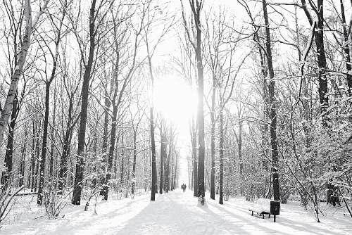 berlin brown trees on snow sand during winter season germany