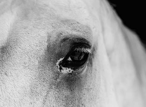 photo grey closeup photo of horse eye horse free for commercial use images