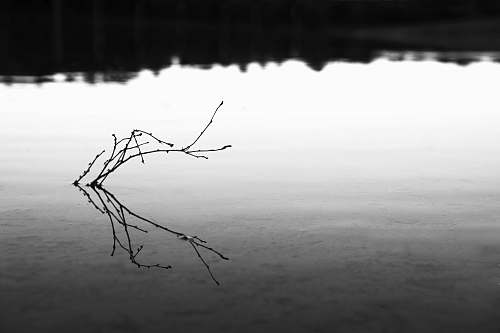 plant driftwood in body of water water
