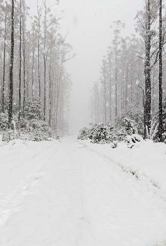 nature forest covered in snow grey