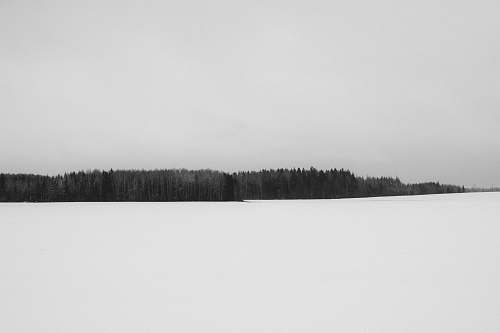 snow forest grayscale photography sigulda