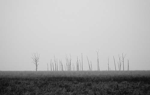 grey gray trees on grassland trees