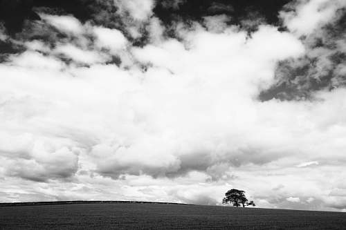 sky grayscale photo of a tree clouds
