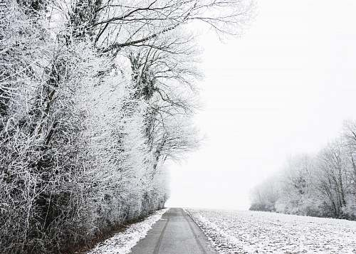 snow grayscale photo of bare trees during winter winter