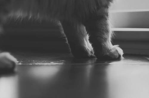 grey grayscale photo of cat paws paws