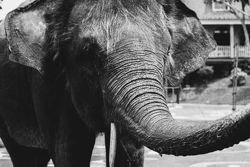 elephant grayscale photo of elephant animal