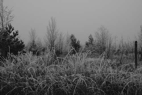 grey grayscale photo of grass frost