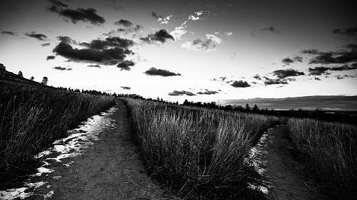 path grayscale photo of grass flat irons