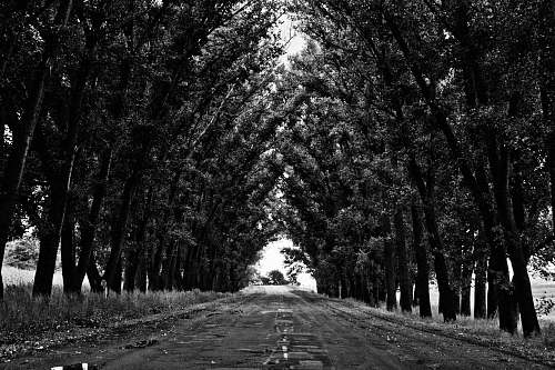 tunnel grayscale photo of leaf trees at daytime trees