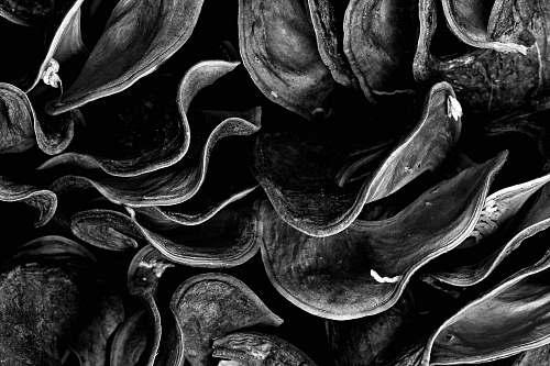 plant grayscale photo of mushrooms black