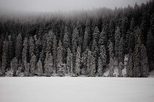 photo mummelsee grayscale photo of snow covered pine trees germany free for commercial use images