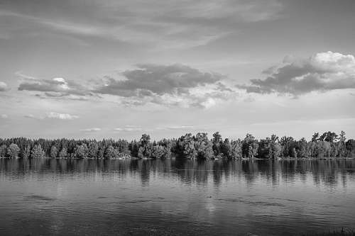 nature grayscale photo of trees near body of water water