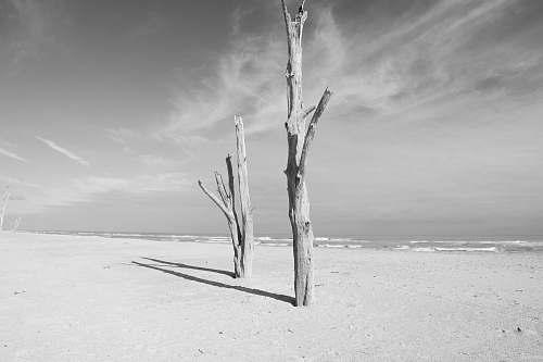 grey grayscale photo of wood wood