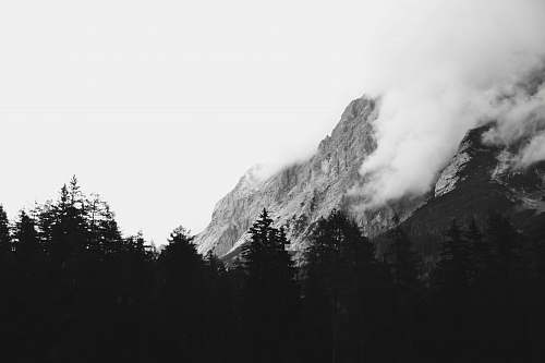 nature grayscale photograph of forest and mountain mountain