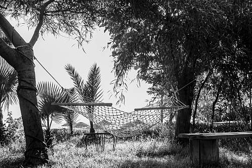 furniture grayscale photography of hammock plant