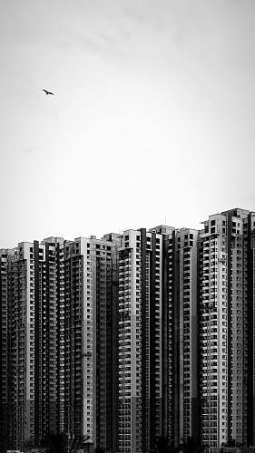 building grayscale photography of high-rise building high rise