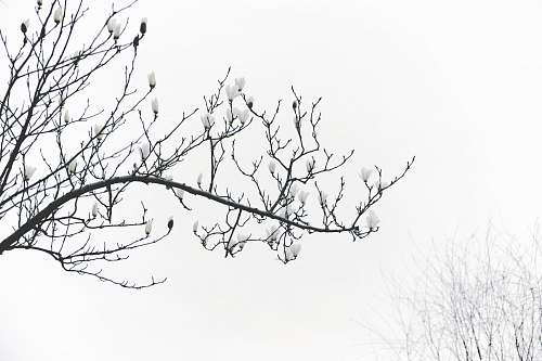 nature grayscale photography of leafless tree outdoors