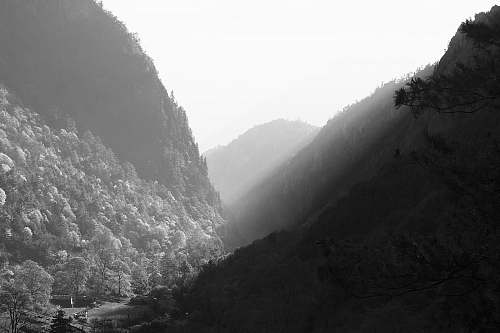 mountains grayscale photography of mountain covered with trees mountain