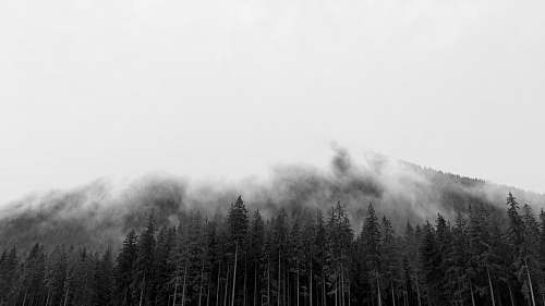 nature grayscale photography of mountain fog