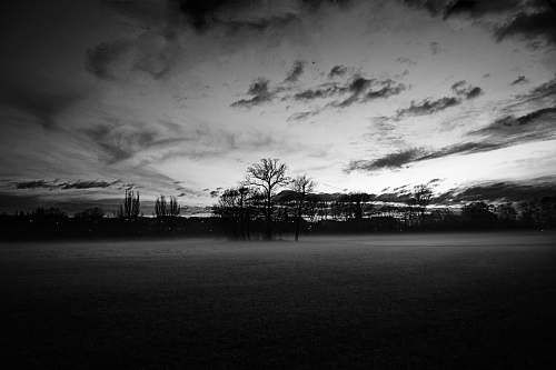 plant grayscale photography of withered trees tree