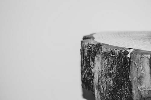 grey grayscale photography of wood slab tree stump