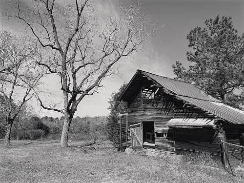 nature grayscale photography of wooden house beside tree outdoors