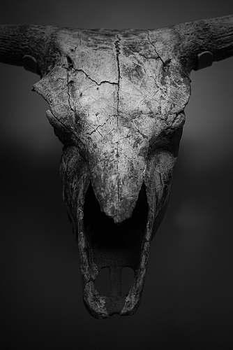 grey greyscale photo of animal skull art
