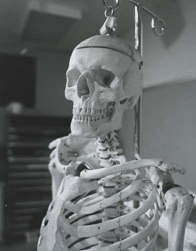 grey human skeleton skeleton