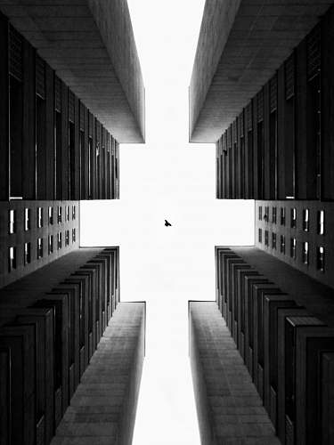 building low-angle grayscale photography of bird in flight over tall buildings corridor