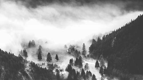 fog mountain covered with pine tree grayscale photography nature
