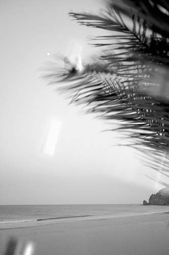 luz beach palm tree on the shore grayscale photography luz