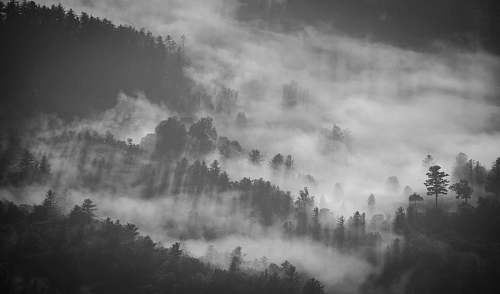 grey silhouette of trees cover with fog photography nature