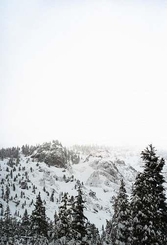 nature silhouette photo of pine trees near mountain alps mountain