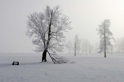 grey snow cover tree during gray cloudy sky dalton