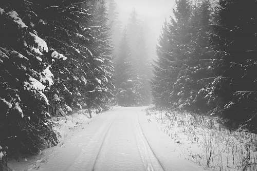 grey snow covered road between pine trees nature