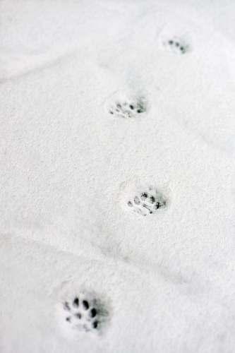 grey snow paw prints footprint