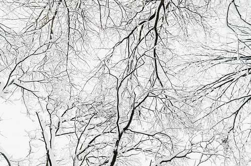 nature tree bare branches outdoors