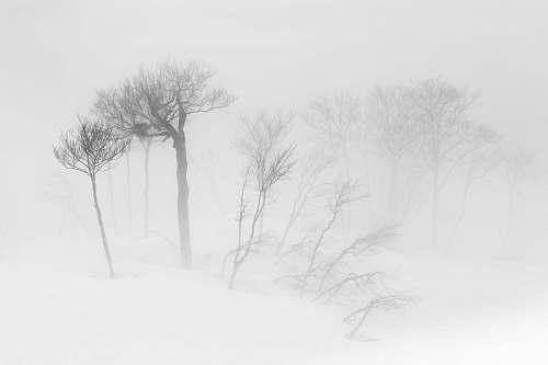 grey trees sketch winter