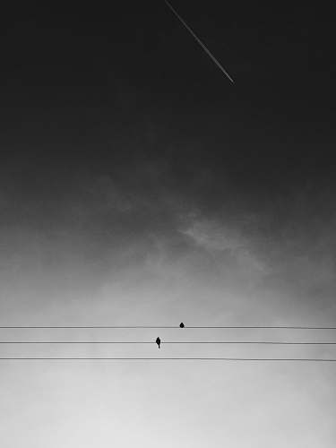 grey two black birds on electric wires under gray sky during daytime dark