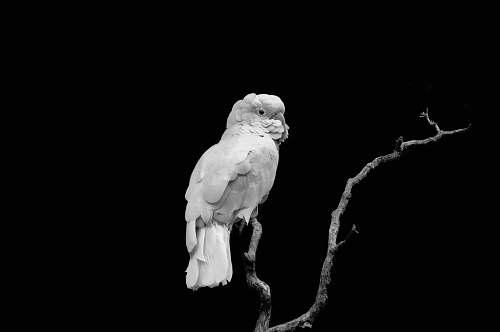 animal white bird on tree branch bird