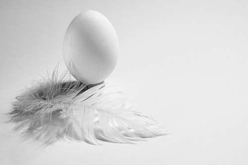 food white egg egg