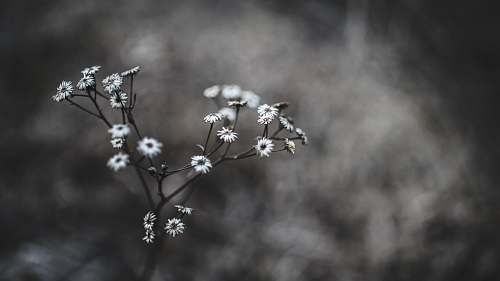grey white flowers in macro shot flower