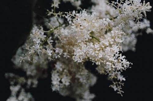 plant white flower flower