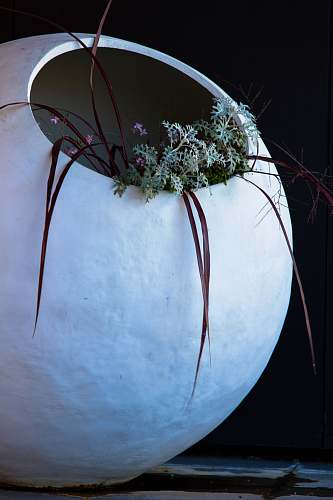 plant white vase and green leafed plan art