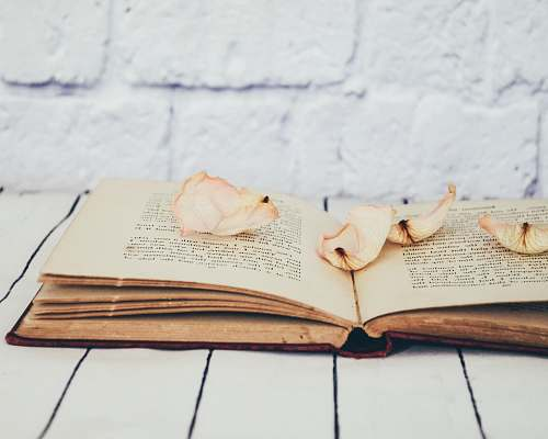 vintage flower petals on opened book diary