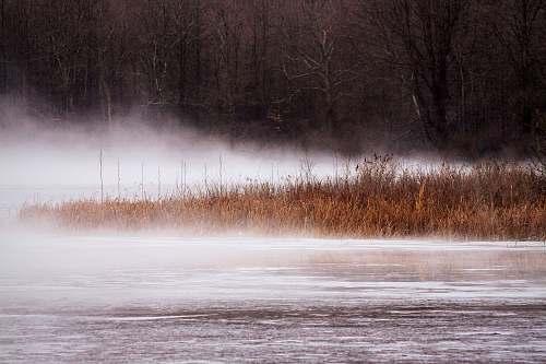 fog body of water grass